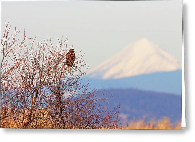 Red-tailed Hawk And Mount Shasta - Northern California Greeting Card