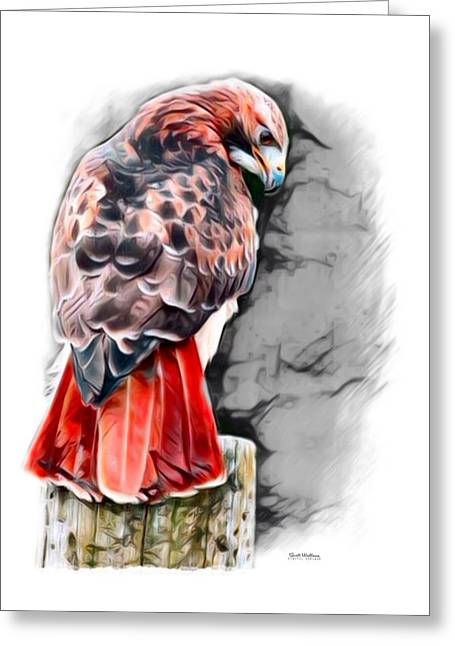 Red Tailed Hawk Color Sketch Greeting Card
