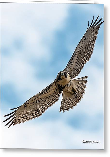 Red-tailed Hawk Coming At Me Greeting Card