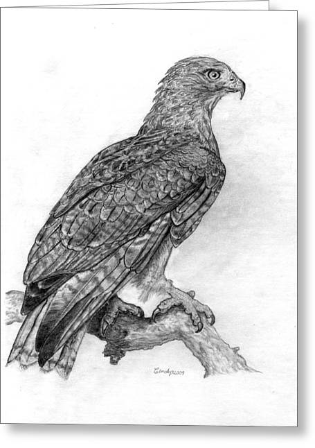 Red Tailed Hawk Greeting Card by Cynthia  Lanka
