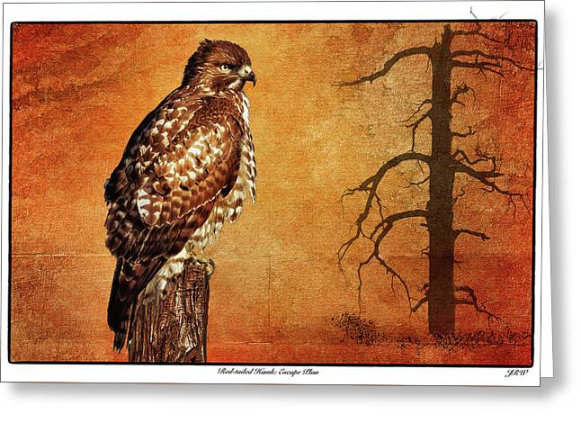Red-tailed Hawk Escape Plan Greeting Card by John Williams