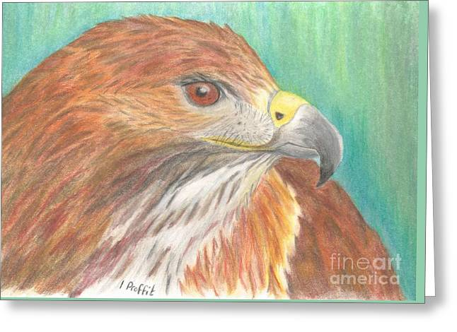 Red Tailed Hawk Greeting Card by Isabel Proffit