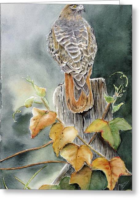 Red-tailed Hawk Lookout Greeting Card by Patricia Pushaw