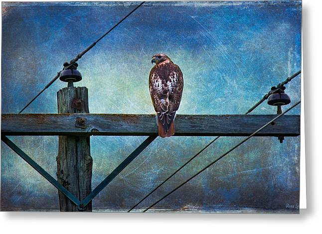 Red-tailed Hawk On Power Pole Greeting Card