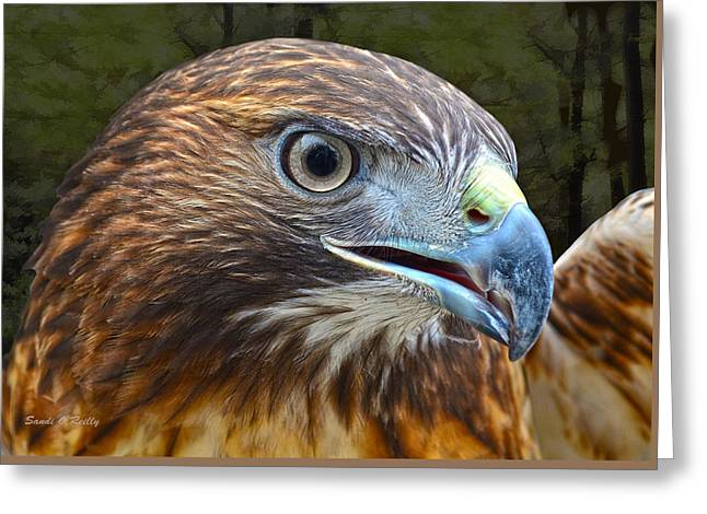 Red-tailed Hawk Portrait Greeting Card by Sandi OReilly