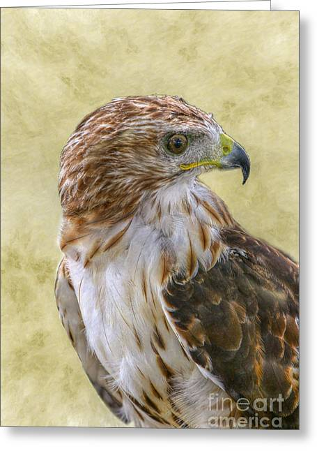 Red Tailed Hawk Greeting Card by Randy Steele