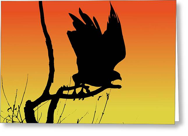 Red-tailed Hawk Taking Flight Silhouette At Sunset Greeting Card by Marcus England