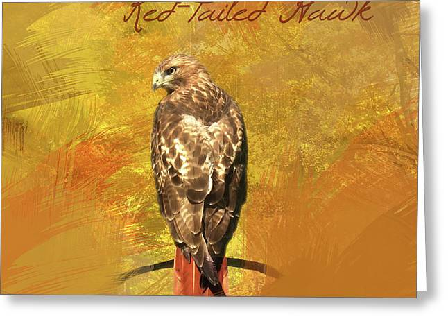 Red-tailed Hawk Watercolor Photo Greeting Card by Heidi Hermes