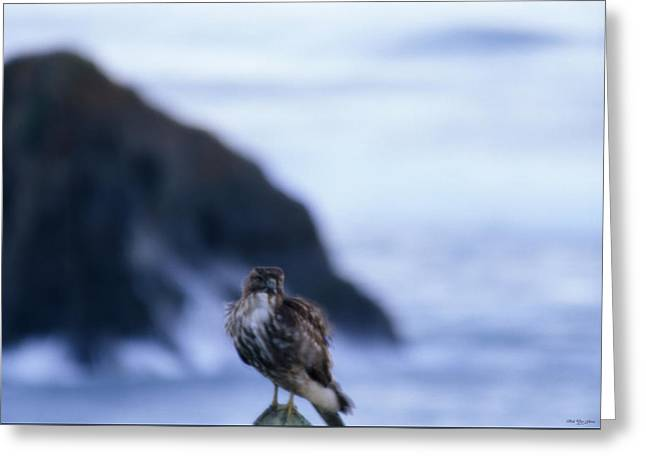 Red-tailed Hawk - Westport Union Landing State Beach Greeting Card