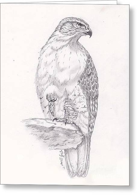 Red Tailed Hawk Greeting Card by William Heflin
