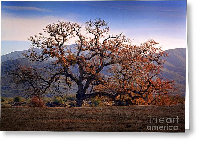 Red Top Tree Greeting Card by Frank Bez