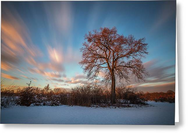 Red Tree Greeting Card by Davorin Mance