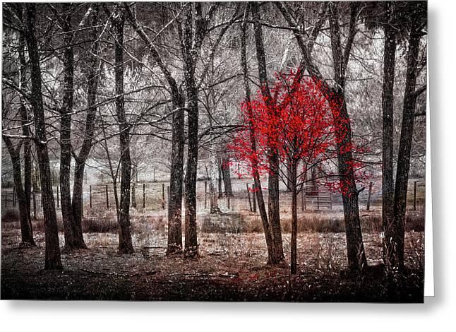 Red Tree Greeting Card by Debra and Dave Vanderlaan