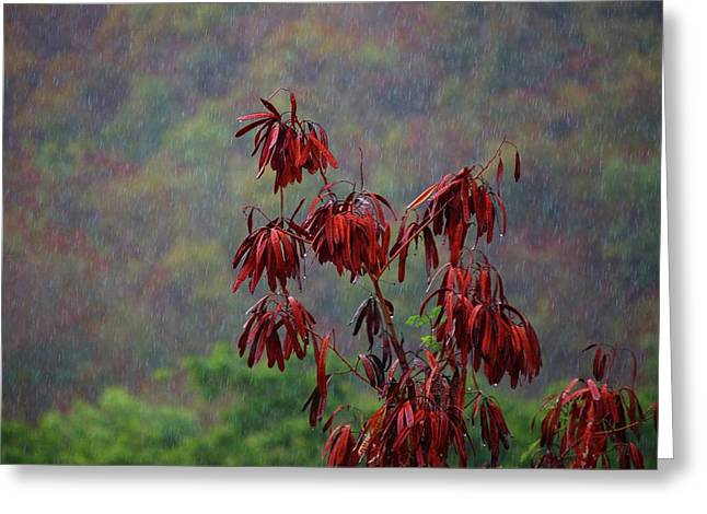 Red Tree In The Rain Greeting Card