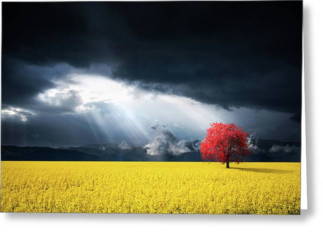 Red Tree On Canola Meadow Greeting Card
