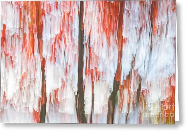 Red Trees On Lake Shore Greeting Card