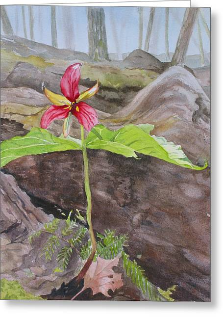 Red Trillium In The Spring  Greeting Card by Debbie Homewood