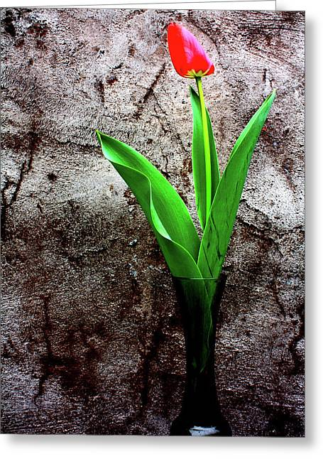 Red Tulip Greeting Card by Gray  Artus