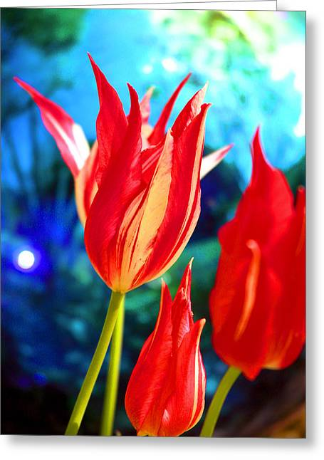 Red Tulip With Blue Ball Greeting Card