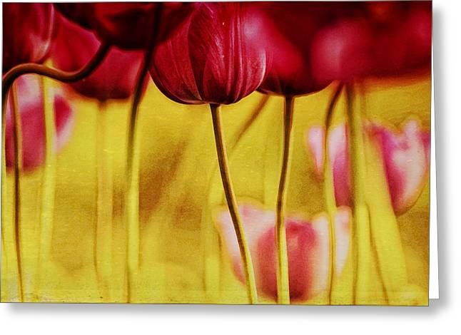 Red Tulips Greeting Card by Iris Greenwell