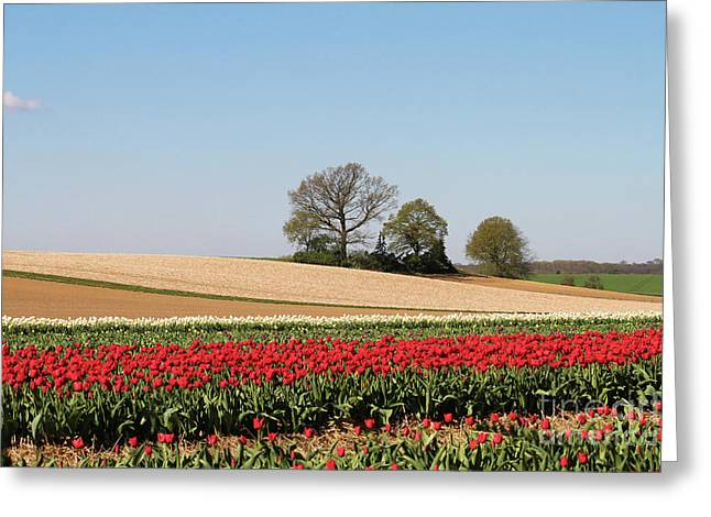Red Tulips Landscape Greeting Card