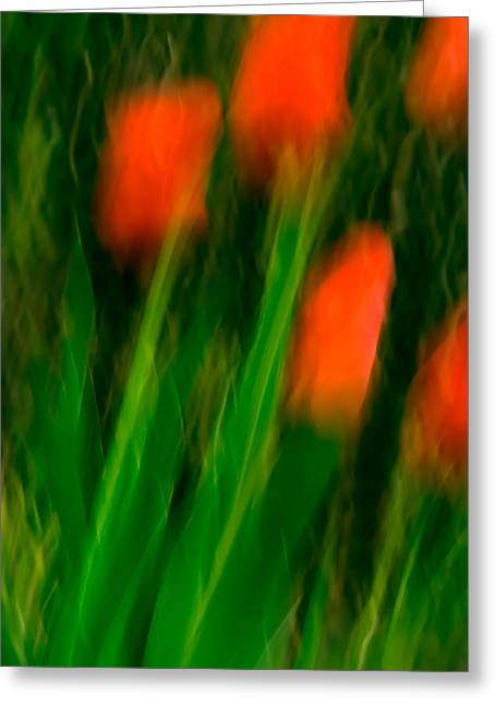 Red Tulips Greeting Card by  Onyonet  Photo Studios