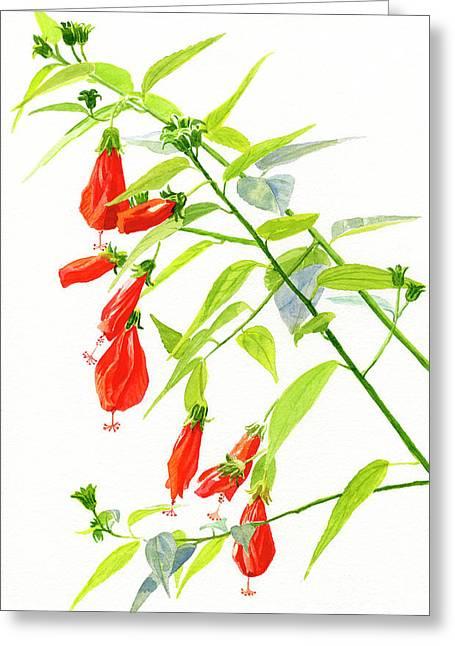 Red Turks Cap Hibiscus Greeting Card