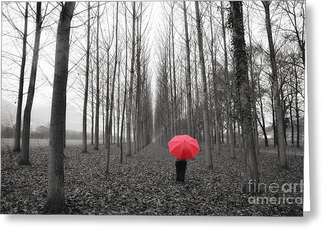 Red Umbrella In An Allee Greeting Card