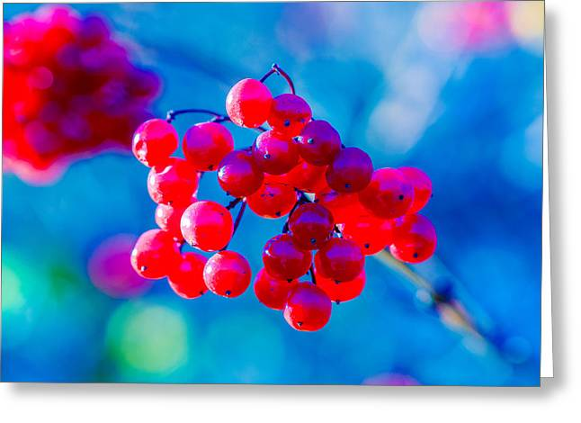 Greeting Card featuring the photograph Red Viburnum Berries by Alexander Senin