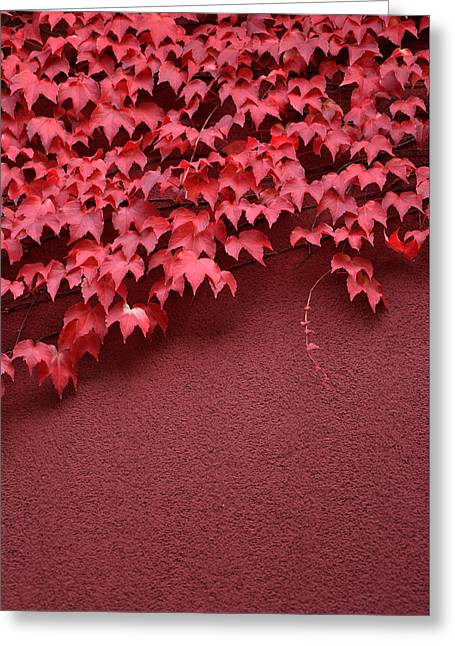 Red Wall Greeting Card