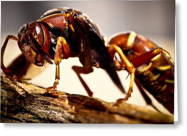 Red Wasp Greeting Card by Ryan Kelly