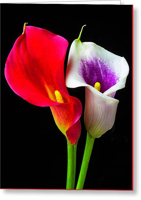 Red White And Purple Calla Lilies Greeting Card