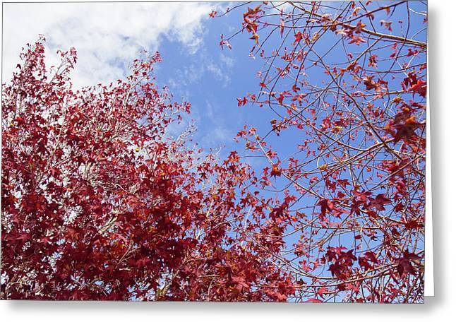 Greeting Card featuring the photograph Red White Blue Colors Of The Nature by Jingjits Photography