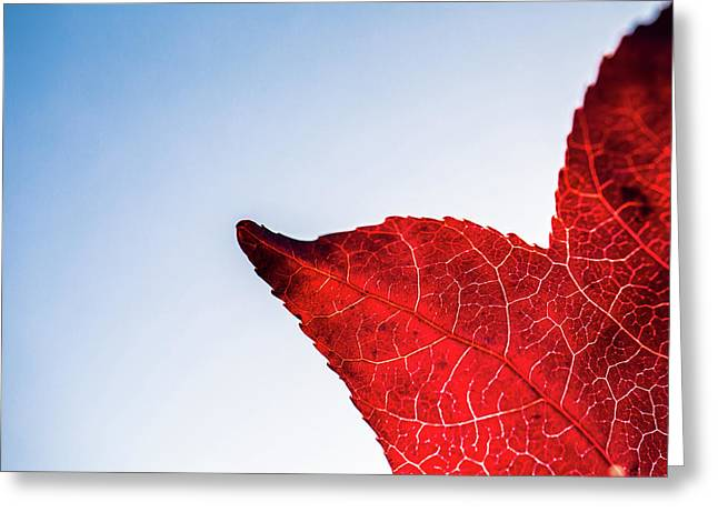 Greeting Card featuring the photograph Red White  Blue by Jingjits Photography