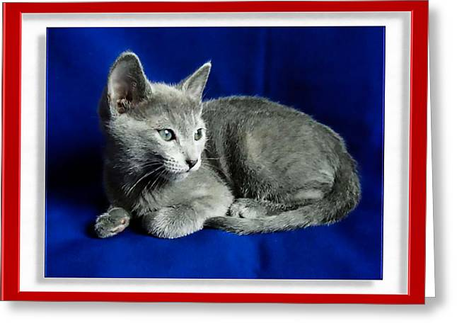 Red, White, Russian Blue Greeting Card