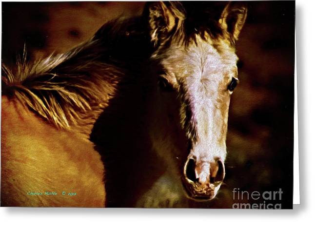 Red Willow Pony Lx Greeting Card