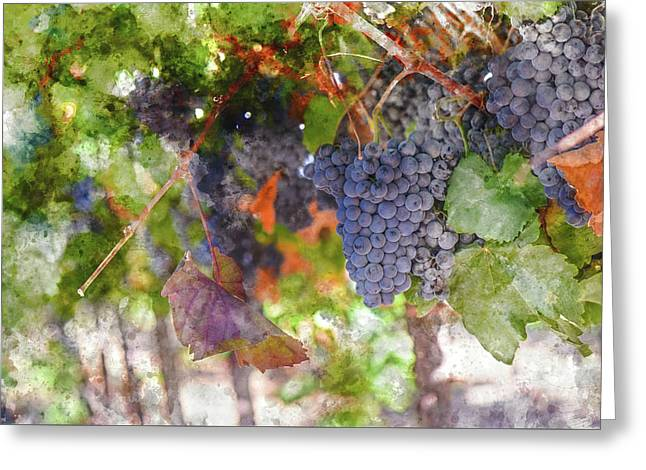 Red Wine Grapes On The Vine In Wine Country Greeting Card by Brandon Bourdages