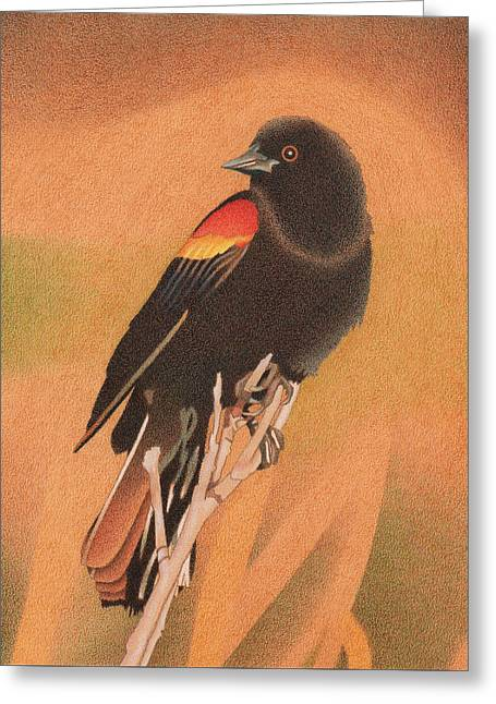 Red-winged Blackbird 3 Greeting Card