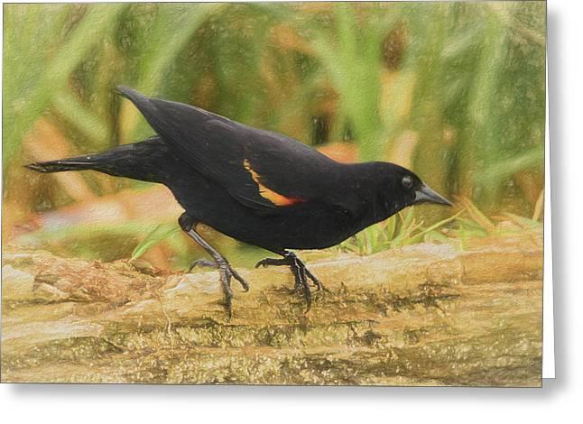 Red Winged Blackbird Greeting Card by Allen Kurth