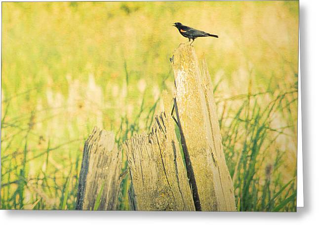Red-winged Blackbird Greeting Card by Bonnie Bruno
