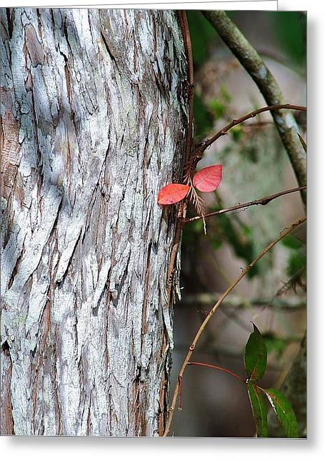 Red Winged Dragonfly Greeting Card