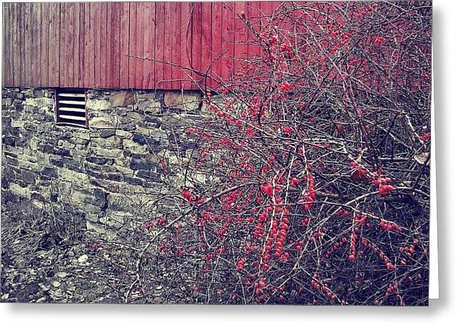 Red Winter Greeting Card by JAMART Photography
