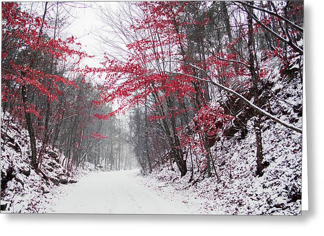 Red Winter Path Greeting Card by Parker Cunningham