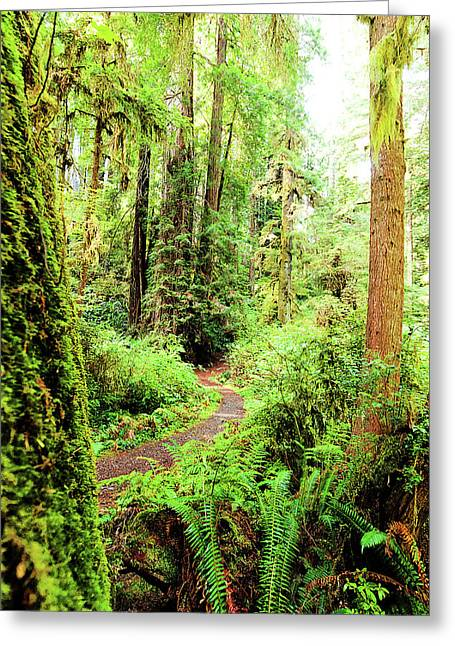 Red Woods Trail Greeting Card