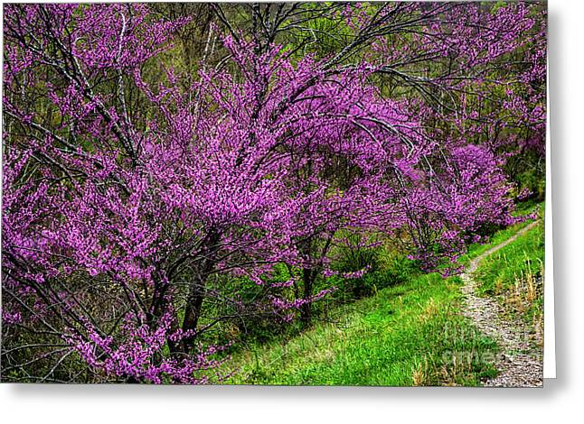 Greeting Card featuring the photograph Redbud And Path by Thomas R Fletcher