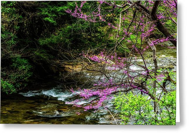 Redbud And River Greeting Card