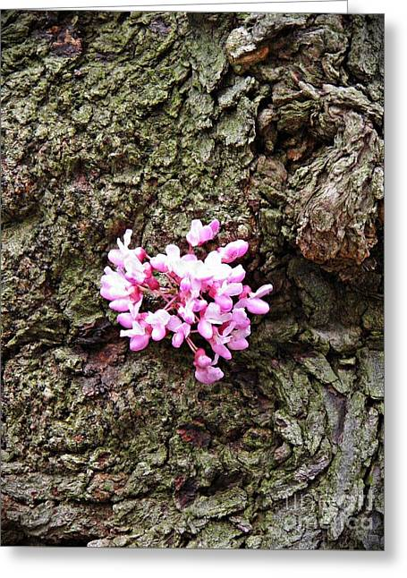 Redbud Flowers 1  Greeting Card