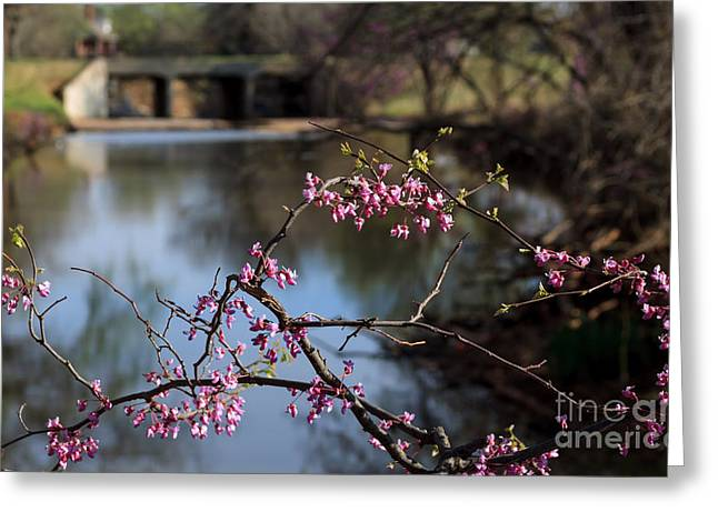 Redbuds And An Old Bridge Greeting Card