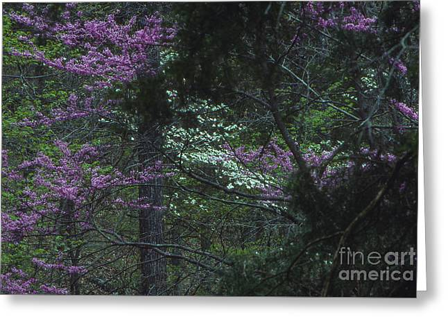 Redbuds And Dogwoods Greeting Card by Lowell Anderson