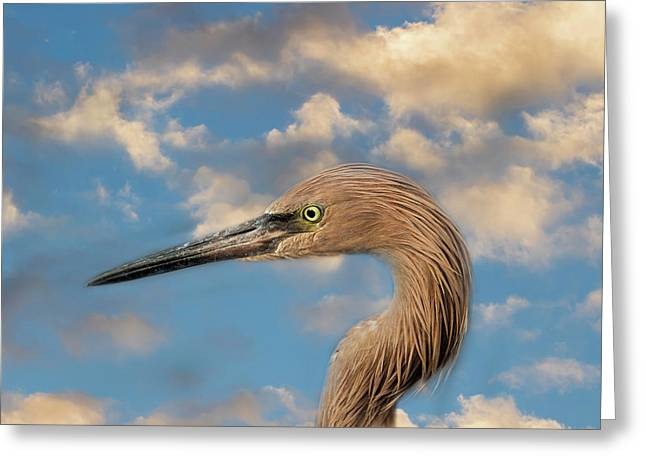 Greeting Card featuring the photograph Reddish Egret by Kim Hojnacki